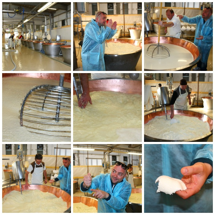 Cheese Factory Collage